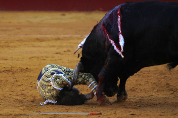 Peruvian bullfighter Roca Rey is gored by a bull during a bullfight in Malaga