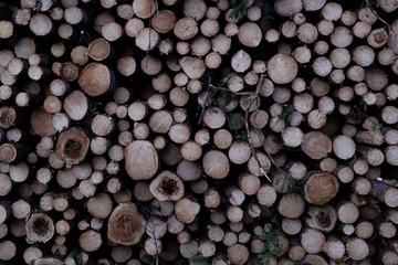 Clearcut Log Pattern