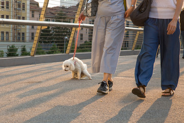 take the dog to pee - poodle pee on a urban bridge
