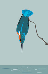 Kingfisher is looking for prey in the river
