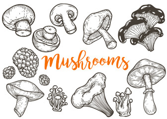 Mushroom hand drawn sketch vector illustration. Mushroom shiitake, truffle, chanterelle, champignon, enokitake, honey agaric, oyster mushroom, fresh organic food isolated on white.
