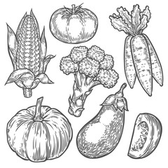 Farmers market badge. Monochrome vintage engraving organic vegetables, wheat and fruits sign isolated on white. Sketch vector hand drawn illustration. Pumpkin, tomato, broccoli, corn, eggplant, carrot