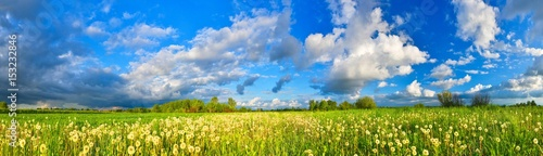 Spring meadow panorama, full of dandelions