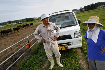 Noboru and Nagako Harada stand among their cows in the evacuated town of Namie in Fukushima prefecture