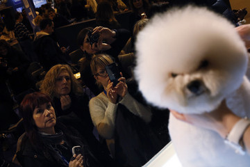 People take pictures of a Bicho Frise after having been groomed during a master class at Propet pet fair at IFEMA fairgrounds in Madrid