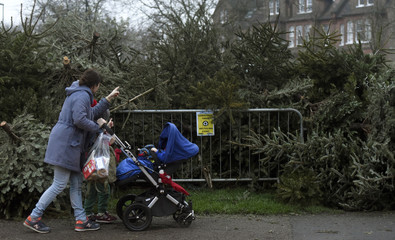 A woman pushes a pram past a pile of Christmas trees left out for recycling, following the end of the Christmas season in London