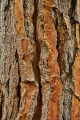 Tree bark texture. wood texture