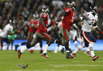 A squirrel  runs on the field during the NFL football game between the Chicago Bears and Tampa Bay Buccaneers at Wembley stadium in London