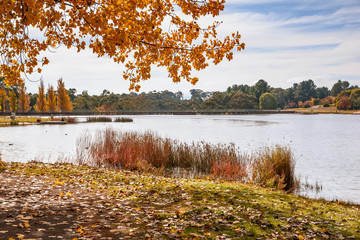 Autumn day at the lake