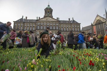 A woman picks a tulip in Dam square, in front of the National Palace in Amsterdam