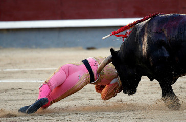 Spanish matador Pablo Belando is tossed by a bull during a bullfight at the Ventas bullring in Madrid