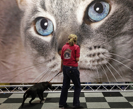 A woman walks a dog past a giant picture of a cat on the final day of the Crufts Dog Show in Birmingham