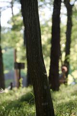 トレッキングの新緑の森