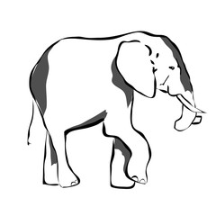 Big elephant in black and white colors