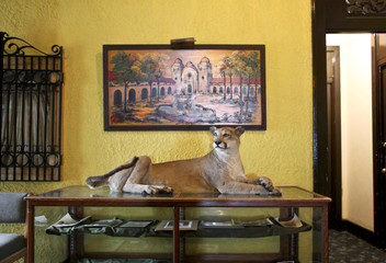 Hotel manager Robin Brekhus shot, stuffed and displayed the feline on the first floor of the Gadsden Hotel in Douglas