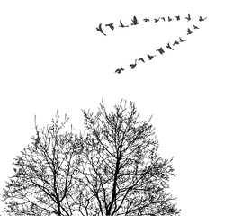 Silhouette flying birds on wood background