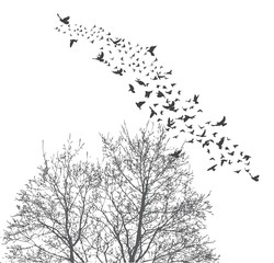 Silhouette flying birds and silhouette tree