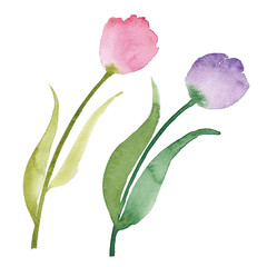 Beautiful watercolor tulips. Watercolor flowers isolated on white background. Wedding design element in high resolution. Tulips clipart.