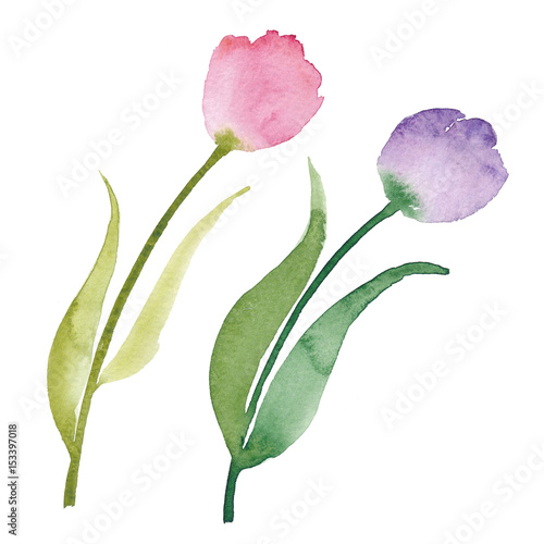Beautiful watercolor tulips watercolor flowers isolated - High resolution watercolor flowers ...