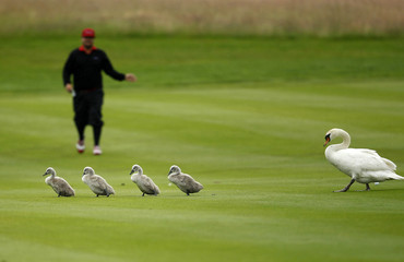 Sweden's Joel Sjoholm gestures towards a family of swans during the final of the International Golf Open in Pulheim near Cologne