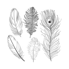 Hand drawn set of various black and white bird feathers, sketch style vector illustration on white background. Realistic hand drawing of peacock, parrot, dove, falcon bird feather