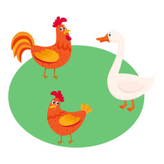 Cute, funny farm birds - rooster, hen, goose - standing in green grass lawn, pasture, cartoon vector illustration isolated on white background. Cute cartoon, comic style farm chicken and goose