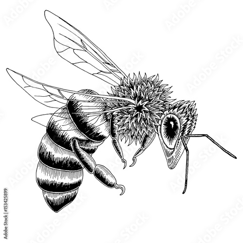 """Hand drawn bee s..."