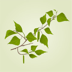 Birch twig with catkins natural background vintage hand draw vector illustration