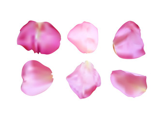 Pink rose petals set. Realistic vector