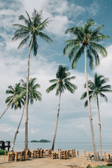 Serenity tropical beach, Vintage tropical palm trees