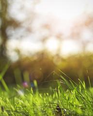 Bright vibrant green grass close up
