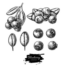 Blueberry vector drawing set. Isolated hand drawn berry, heap, b