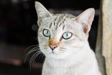 cat thai nature, lovely pet,soft focus