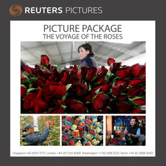 ATTENTION EDITORS - PICTURE PACKAGE 'THE VOYAGE OF THE ROSES'