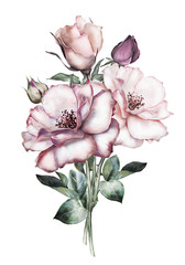watercolor flowers isolated on white background. floral illustration in Pastel colors,  pink rose. Bouquet of flowers. Leaf and buds. Cute composition for wedding or greeting card
