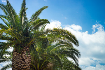 Palm trees against sky. Travel holiday background. Trip vacation.