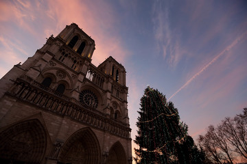 Pink clouds fill the sky at sunrise above the Notre Dame Cathedral near a decorated Christmas tree as part of the holiday season Paris