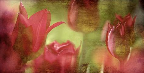 Fotoväggar - tulips textured concept