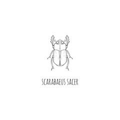 Scarab beetles. Vector illustration.