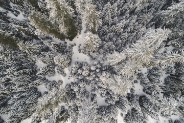 High angle view of trees covered with snow