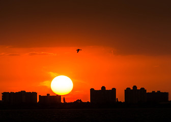 Sun at the sunset over the city, bird flying silhouette