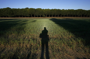 A shadow is cast on a sown field with pine trees in the background near Donana Natural Reserve