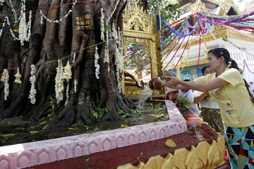 Devotee pours water on a Buddha statue resting under a Bodhi tree during the Kason Watering Festival celebrations in Yangon