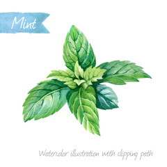 Watercolor illustration of fresh peppermint leaves solated on white background with clipping path included