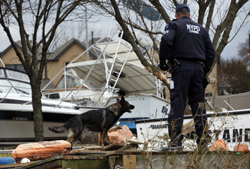 NYPD K9 Unit searches for possible victims bodies amid boats and debris washed ashore by Hurricane Sandy on the south side of the Staten Island section of New York City