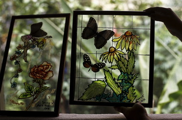 Jenny Viquez shows a painting made using butterflies at Blue Morpho Butterfly House in Alajuela