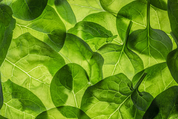 background from fresh spinach leaves