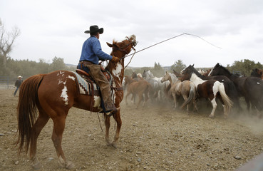 Kail Mantle herds horses in a corral before Montana Horses' annual horse drive outside Three Forks