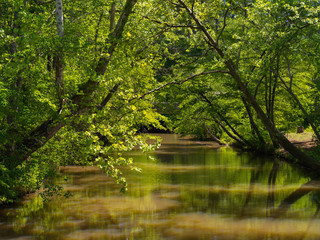Leafy green river view with reflections in still water and arching trees