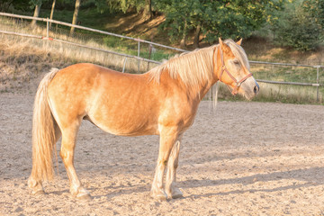 Portrait of horse in paddock